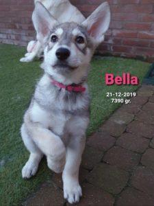 Bella Del Urlando Lupo