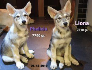Phelicia & Liona Del Urlando Lupo