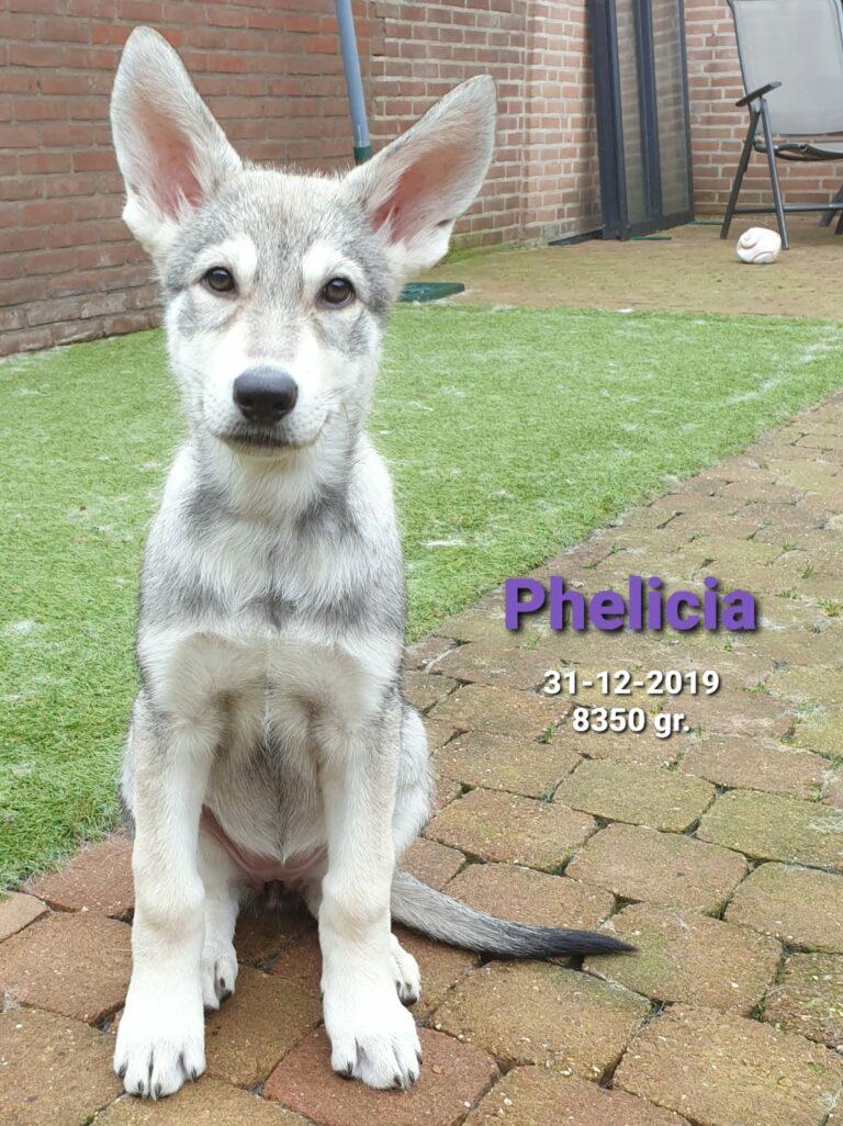 phelicia